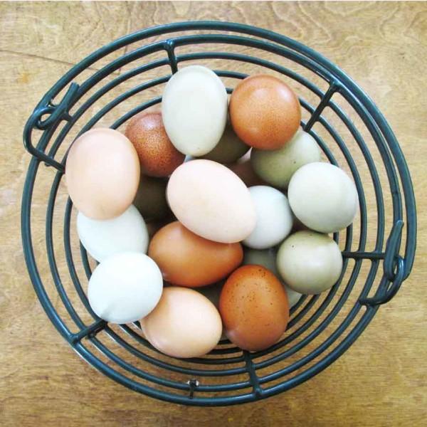 fresh eggs for sale in Oakhurst texas